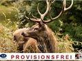 bei Propertiger.com., Immobilien inserieren und suchen., und AS Immobilien International Kilic., http://www.propertiger.com/de/agents/1451/properties