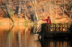 Bolu - Yedigöller The Yedigoller (Seven Lakes) National Park is in the north of the Bolu province, and south of Zonguldak in the western Black Sea region.