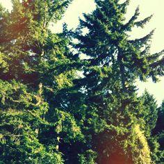 Trees. Abbots wood. Hailsham, East Sussex, England.
