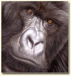 Beautifully done Gorilla portrait by Wildlife Artist Jason Morgan