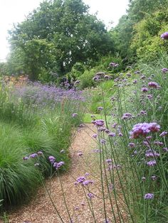 Ornamental Grasses Garden Shrubs – Famous Last Words Prairie Garden, Meadow Garden, Dream Garden, Prairie Planting, Small Cottage Garden Ideas, Garden Cottage, Backyard Cottage, Family Garden, Gravel Garden