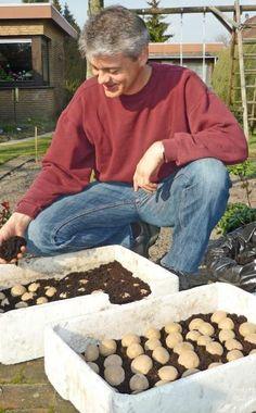 Ab Mitte Februar können Sie Ihre Pflanzkartoffeln vorkeimen. Hier stellen wir Ihnen die verschiedenen Methoden vor und sagen Ihnen, bei welchen Sorten das Vorkeimen sinnvoll ist.