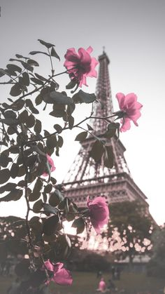 Paris Wallpaper, Rose Wallpaper, Cute Wallpaper Backgrounds, Nature Wallpaper, Cute Wallpapers, Vintage Flower Backgrounds, Eiffel Tower Photography, Paris Photography, Amazing Photography