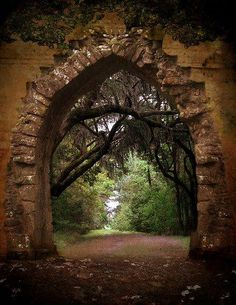Enticing forest portal in Australia