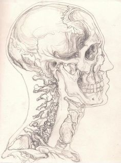 Fun fact: if the very first vertebrae that comes out of the base of your skull w… Fun fact: if the very first vertebrae that comes out of the base of your skull was severed you would istantly die……thanks anatomy class lol Anatomy Sketches, Art Drawings Sketches, Drawings Of Skulls, Human Anatomy Drawing, Drawing Eyes, Skull Sketch, Posca Art, Art Studies, Art Sketchbook