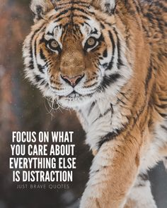 Focus is helpful in any kind of situation. If you're trying to reach your goal and are focused on it, that makes you automatically a step closer towards achieving it. Don't let other things distract you, ignore them. Stay focused! #justbravequotes #quote #quotes #motivation #inspiration #focus #goals #tiger #hustle #grind #entrepreneur