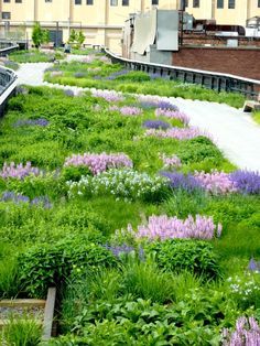 Sky Garden, Lawn And Garden, Drought Tolerant Garden, Blossom Garden, Garden Types, Rooftop Garden, Garden Landscape Design, Garden Borders, Ornamental Grasses