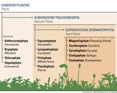 Plant Kingdom Divisions