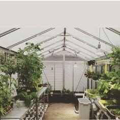 Our greenhouse in Kong Oscars gate God onsdag til dere alle☀️ #colonialen #bergen #kongoscarsgate #greenhouse #urter