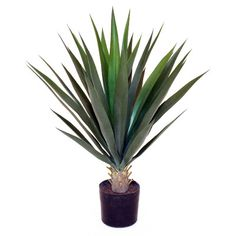 Add a natural touch to your foyer or patio with this indoor/outdoor faux yucca plant, arranged in a classic planter. Silk Plants, Fake Plants, Yucca Plant, Outdoor Plants, Indoor Outdoor, Indoor Garden, Outdoor Living, Floor Plants, Herbs Indoors