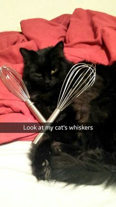 I can't stop laughing at this!  The cat looks totally amused too ;) #catsnapchat #catsofpinterest #cookingwithcats