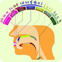 Phonetics Poster for the speech path in me Articulation Therapy, Articulation Activities, Speech Therapy Activities, Language Activities, Speech Therapy Posters, Oral Motor Activities, Speech Language Therapy, Speech Language Pathology, Speech And Language