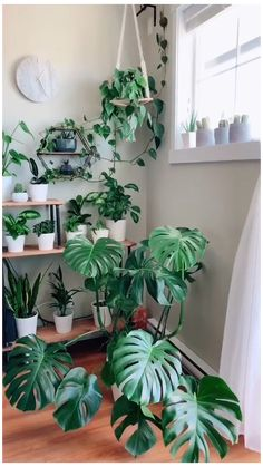 Inside Plants, Room With Plants, House Plants Decor, Plant Decor, Wall Of Plants, Plants In Living Room, Big House Plants, Popular House Plants, Garden Plants Vegetable