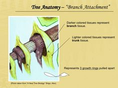 Image result for leaving the cave of ancient arboriculture branch attachment