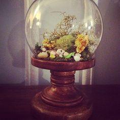 cute terrarium