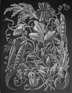 """Pea Pods"" -an inch black clayboard engraving (scratchboard. Pea Pods, Scratchboard, New Print, Line Drawing, Food Art, Printmaking, Tatoos, Art Drawings, Black And White"