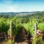 Topaz Simplify    Vineyard Scene With Roses