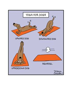 Dogs are great at yoga until a squirrels shows up. Then all bets are off. Museum-quality print made on thick, archival and acid-free matte paper. Printed in America, sweatshop free. Available in 8x10