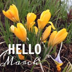 !¡ Hello March! Ready for April showers and May Flowers.