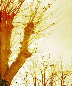 Ghostly Trees 127 film in a Bencini Comet camera. © Chris Trew 2014 Plastic Cameras