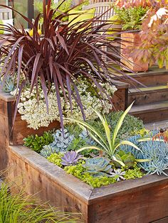 Succulents are perfect for raised beds that receive ample sunlight -- six hours or more per day is ideal but not required for these versatile plants. Plants in this container:Succulents, Aeoniums, Echeverias, Sedums, and Senecio serpens/