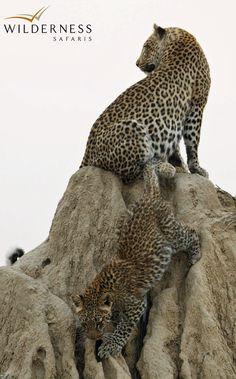 Wilderness Safaris - Botswana  RHINO FORCE bracelets is raising funds for Wilderness Safaris/ Wilderness Wildlife Trust to RELOCATE black rhino to Botswana. See more on www.beadcoalition.com press room or Facebook