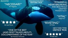 Blackfish, everyone needs to see it!