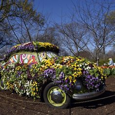 Dallas Arboretum and Botanical Garden presents Dallas Blooms: Flower Power, the Southwest's largest spring floral festival. Get your groove on in the...