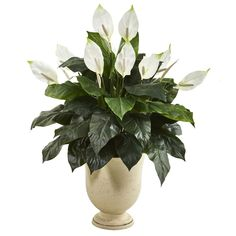 Incorporate a classic accent to everyday interiors with this artificial spathiphyllum plant featuring a rich collection of dark leaves, highlighted throughout with realistic silk blooms look real to the naked eye. Standing tall from a white urn Silk Plants, Fake Plants, Foliage Plants, Green Plants, Artificial Plants, Floor Plants, Peace Lily, Silk Flower Arrangements, Ficus