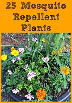 25 Mosquito Repellent Plants for Your Garden - - Want to keep mosquitoes and gnats from bugging you this summer? Here are 25 Mosquito Repellent Plants and tips for creating your own planter. Patio Plants, Outdoor Plants, Outdoor Gardens, Slugs In Garden, Garden Pests, Container Plants, Container Gardening, Container Flowers, Succulent Containers