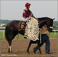 The blanket of carnations given to the Belmont winner each year. This is 2008 winner Da'Tara.