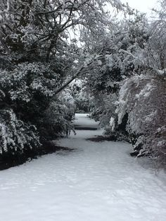 Snow at Lotherton Hall