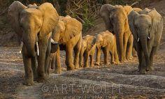 Elephant Family -  photo by Art Wolfe.