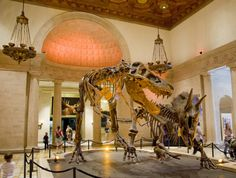 #Natural History Museum - Dino Delights | Discover Los Angeles