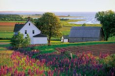 Coastal farm: Quiet and scenic with a breath of fresh air.