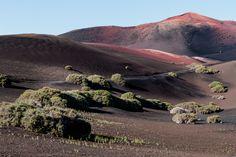 Auf Lanzarote und der Nachbarinsel La Graciosa ist die vulkanische Herkunft der kanarischen Inseln am offensichtlichsten und jüngsten. 1730 riss eine gigantische Eruption das auf Eiland auf und schuf in nur 6 Jahren Bauzeit eine einmalig außerirdisch anmutende Landschaft. Lanzarotes Weinanbau in der Lavawüste ist weltweit einzigartig und ergänzt Fisch und Meeresfrüchte wie Faust und