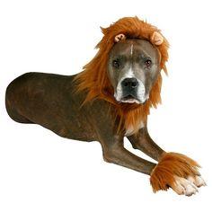 Halloween Lion Headwear Pet Costume : Target