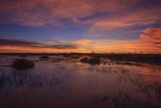 Participants in Lewis Kemper s nature photography workshop will be photographing at the Yolo Bypass Wildlife Area as the sun goes down on Feb. 2. (Lewis Kemper/Courtesy)