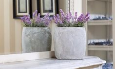 Plants are often considered a beautiful way to furnish a living room or dress up a table, yet they possessmany uncelebrated benefits. When the right ones are grown at home, they can do wonders ...