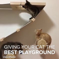 This furniture is purrrfect for cats!