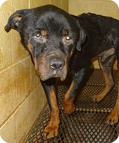 Pet Adoption has dogs, puppies, cats, and kittens for adoption. Adopt a pet Animal Shelter, Animal Rescue, Rome Georgia, Fb Like, Rottweiler Mix, Animal Protection, My Heart Is Breaking, Pet Adoption, Animal Pictures