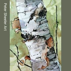 """Miniature Plein Air birch. Just me, the tree and the great outdoors. 2.5x""""x3.5"""". Sold on auction at www.ebay.ca/usr/sheelerart #art #artist #original #watercolor #watercolour #miniature #painting #aceo #ebay #paintingaday #ink #pen #waterbrush #winsornewtonmarker #farm #country #countryside #rural #landscape #birch #pleinaire #tree"""