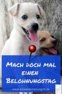Welpenerziehung Belohnungstag Welpenerziehung Welpen Hundeerziehung