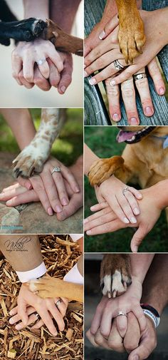One of the sweetest things about wedding is to include your love furry friends, and not just for the sake of dressing them up, but for sharing your preciously memorable moments with them. For those who have dogs, it wouldn't be the whole perfect special day without them as a member of the family. Here'reRead more