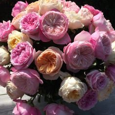 Awesome David Austin roses