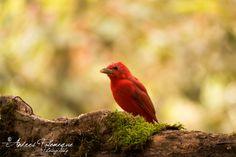 Flickr Bird, Animals, Places, Fotografia, Animales, Animaux, Birds, Animal Memes, Animal