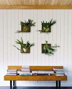 Skip the art gallery wall + make a living one with fern.