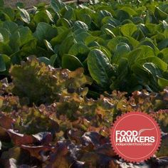 Cott Farm Salads - We aim to produce quality edibles, with respect given to the environment in which they are grown and the people who might like to eat them.