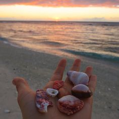 """""""There are only two ways to live your life. One is as though nothing is a miracle. The other is as though everything is a miracle.""""  Albert Einstein  _____ #ladyelliotisland #southerngreatbarrierreef #greatbarrierreef #thisisqueensland #seeaustralia #beach #ocean #oceanlover #shells #miracles #mermaid #mermaidlife #saltlife #quoteoftheday #quote #sunset #instagood #instadaily #inspiration #ig_australia #motivation #wanderlust #waterlust #sunset #happiness #fuelhappiness #gratitude…"""