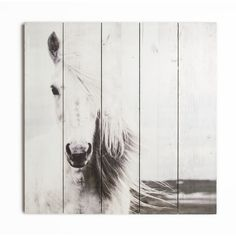 Found it at Wayfair - Summer 2015 Horse Photographic Print on wrapped Canvas
